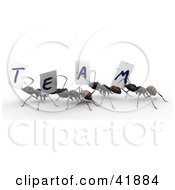 Clipart Illustration Of 3d Worker Ants Carrying Team Signs by Leo Blanchette
