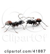 Two 3d Worker Ants Conversating Together