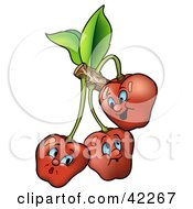 Three Expressive Cherries On A Branch