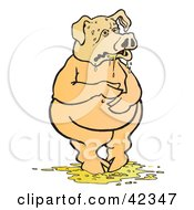 Nauseated Pig Standing In Puke