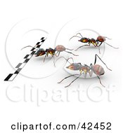 Three Racing Ants Hurrying Towards The Finish Line