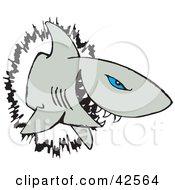 Blue Eyed Shark Crashing Through A Wall