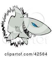 Clipart Illustration Of A Blue Eyed Shark Crashing Through A Wall