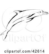 Black Dolphin Sketch