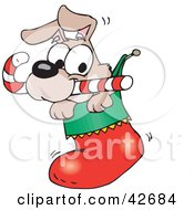 Cute Puppy With A Candy Cane Peeking Out Of A Christmas Stocking
