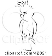 Clipart Illustration Of A Black And White Sketch Of A Cockatoo Bird