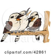 Clipart Illustration Of Three Kookaburra Birds Perched On A Branch by Dennis Holmes Designs