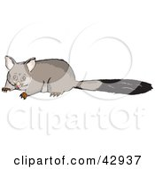 Clipart Illustration Of A Scared Possum With A Long Tail