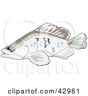 Clipart Illustration Of A Swimming Barramundi Fish