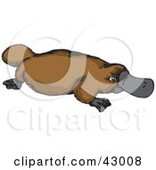 Clipart Illustration Of A Brown Platypus by Dennis Holmes Designs