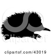 Clipart Illustration Of A Black Silhouetted Echidna Spiny Anteater
