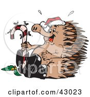 Christmas Echidna Watching Ants On A Candy Cane