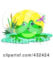 Happy Frog Against The Sun