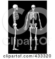 Royalty Free RF Clipart Illustration Of A 3d Human Skeleton Shown In Profile And Frontal Views