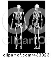 Royalty Free RF Clipart Illustration Of A 3d Human Skeleton Shown In Profile And Rear Views by Mopic