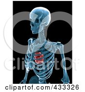 Royalty Free RF Clipart Illustration Of A 3d Human Skeleton And Heart Xray by Mopic