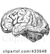 Royalty Free RF Clipart Illustration Of A Black And White Human Anatomical Brain Drawing 3
