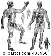 Royalty Free RF Clipart Illustration Of A Digital Collage Of Black And White Full Bodied Human Anatomical Drawings