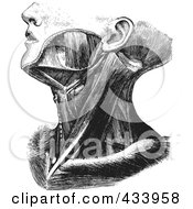 Royalty Free RF Clipart Illustration Of A Black And White Human Anatomical Drawing 3