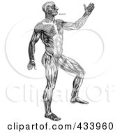 Royalty Free RF Clipart Illustration Of A Black And White Full Bodied Human Anatomical Drawing 1