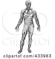 Royalty Free RF Clipart Illustration Of A Black And White Full Bodied Human Anatomical Drawing 4
