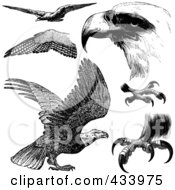 Royalty Free RF Clipart Illustration Of A Digital Collage Of Black And White Sketched Eagles And Eagle Parts