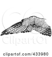 Royalty Free RF Clipart Illustration Of A Black And White Sketch Of An Eagle Wing by BestVector