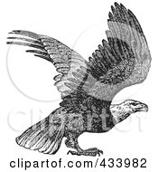 Royalty Free RF Clipart Illustration Of A Black And White Sketch Of An Eagle Preparing To Take Off by BestVector
