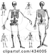 Royalty Free RF Clipart Illustration Of A Digital Collage Of Vintage Black And White Sketch Of Human Skeletons