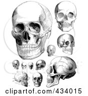 Royalty Free RF Clipart Illustration Of A Digital Collage Of Vintage Black And White Anatomical Sketches Of Human Skulls by BestVector