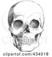 Royalty Free RF Clipart Illustration Of A Vintage Black And White Anatomical Sketch Of A Human Skull 2 by BestVector