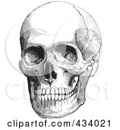 Royalty Free RF Clipart Illustration Of A Vintage Black And White Anatomical Sketch Of A Human Skull 1 by BestVector