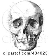 Royalty Free RF Clipart Illustration Of A Vintage Black And White Anatomical Sketch Of A Human Skull 11 by BestVector