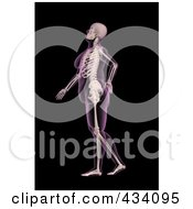Royalty Free RF Clipart Illustration Of An Xray Of An Overweight Female Skeleton Walking With A Bad Back