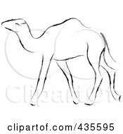 Black Sketched Camel