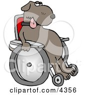 Injured Dog Sitting In A Wheelchair