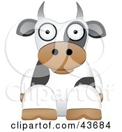 Cute White And Black Dairy Cow Resting And Facing Front On A White Background
