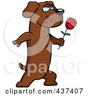 Royalty Free RF Clipart Illustration Of A Romantic Dachshund Presenting A Single Rose