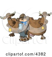Cowboy Standing Beside Milk Cows With A Hot Branding Iron Clipart