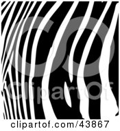 Clipart Illustration Of A Background Of Curved Black Zebra Stripes