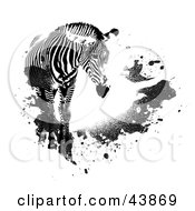 Clipart Illustration Of A Lone Zebra With Black Grunge Splatters