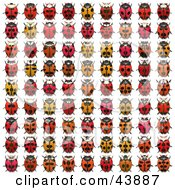 Clipart Illustration Of A Rows Of Red And Orange Ladybugs