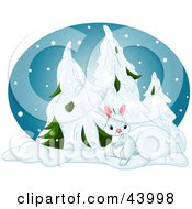 Cute Bunny Near Snow Flocked Evergreens In A Forest On A Snowy Winter Night