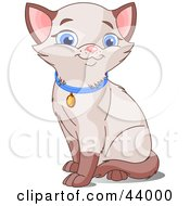 Clipart Illustration Of A Cute Siamese Kitten With Blue Eyes Wearing A Collar by Pushkin