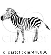 Royalty Free RF Clip Art Illustration Of A Profiled Zebra by Pushkin