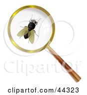 Royalty Free RF Clip Art Of A Common Housefly Under A Magnifying Glass by michaeltravers