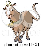 Brown Horned Cow Wearing A Bell