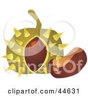 Clipart Illustration Of A Spiky Chestnut