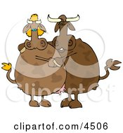 Male And Female Cows Dancing Together Clipart