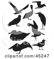 Royalty Free RF Clipart Illustration Of A Digital Collage Of Profiled Black Bird Silhouettes